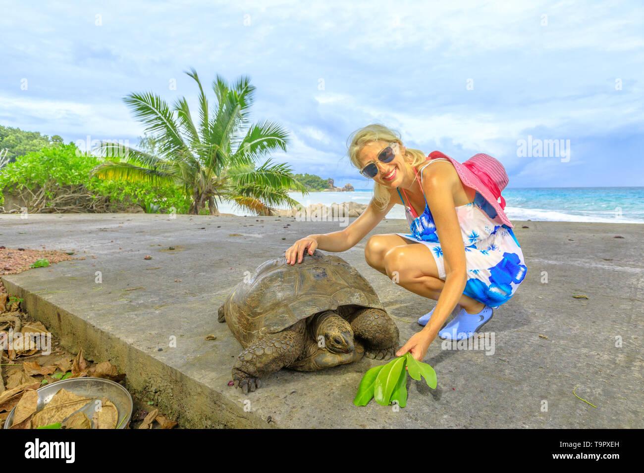 Happy caucasian tourist woman near Anse Severe in La Digue with Aldabra Giant Tortoise, Aldabrachelys gigantea. Popular tourist attraction in - Stock Image