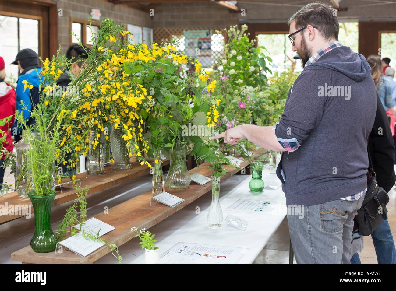 People viewing wildflower specimens on display at the Wildflower Festival at Mount Pisgah Arboretum in Eugene, Oregon, USA. - Stock Image
