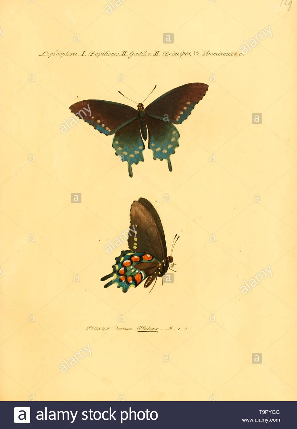 Sammlung exotischer Schmetterlinge, by Jacob H¿bner, 1806. - Stock Image