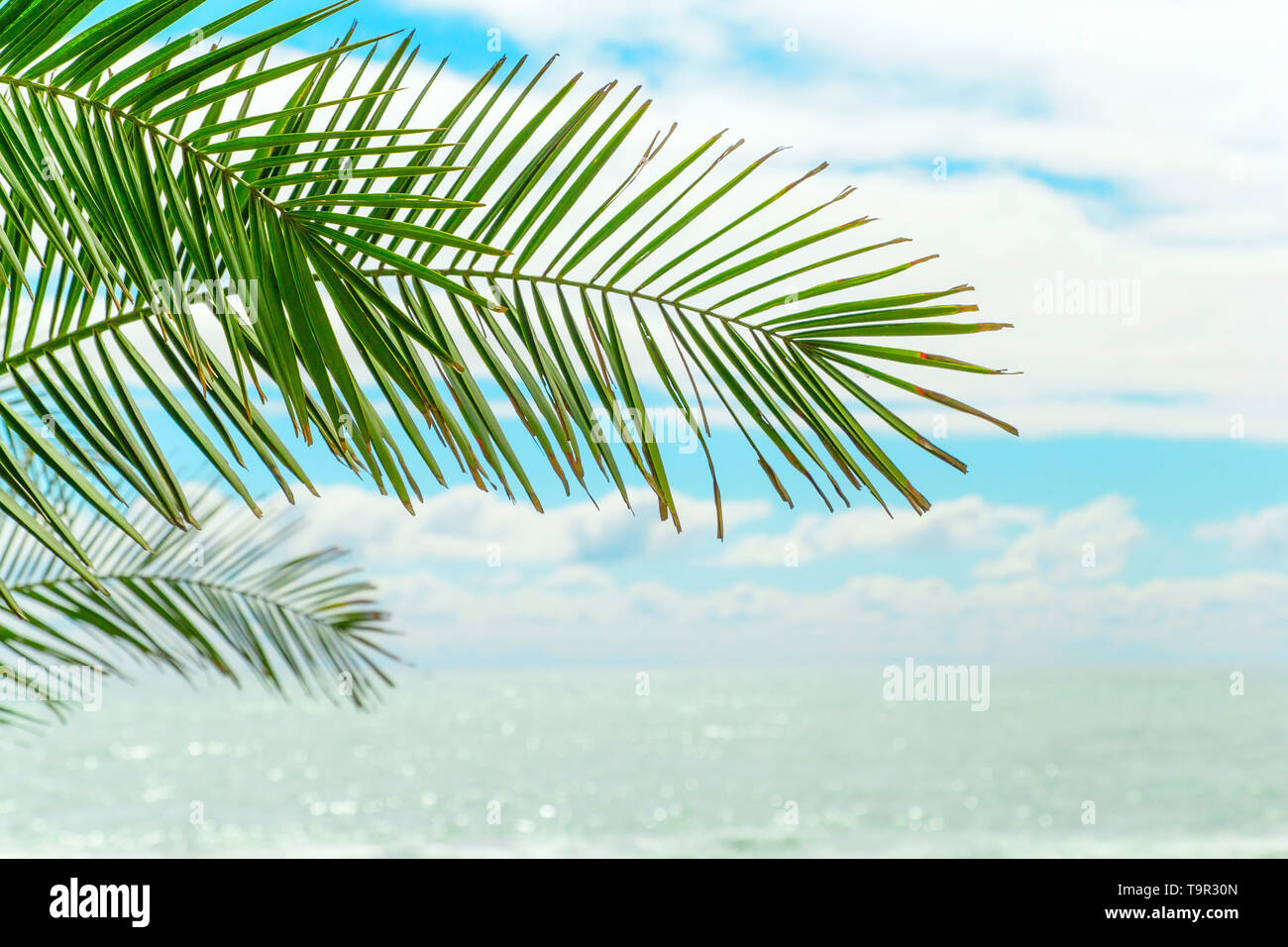 palm  green leaf against the blue sky and water - Stock Image