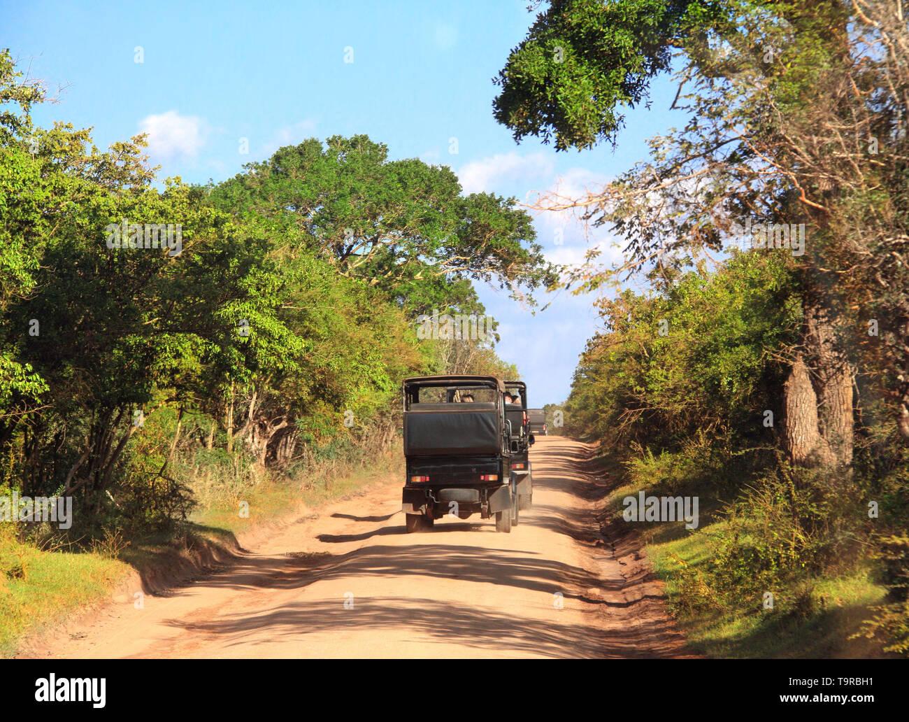 Car safari in Yala National Park. Tourists in cars on the dusty road. Sri Lanka Stock Photo
