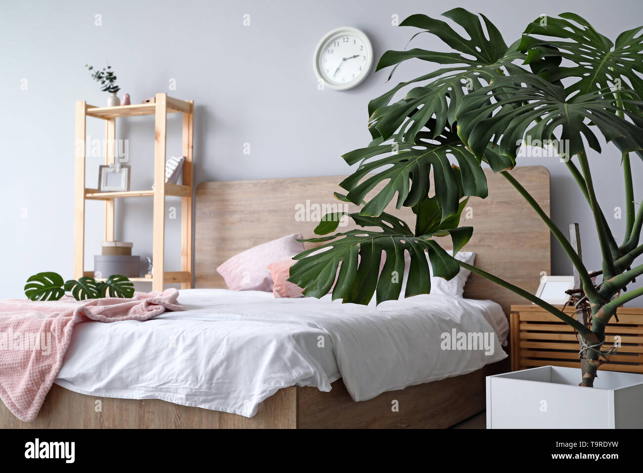 Green Tropical Plant In Interior Of Bedroom Stock Photo Alamy