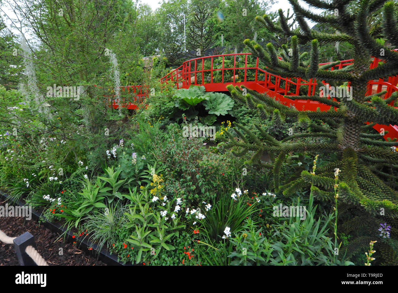 The Trailfinders Undiscovered Latin America Garden (designed by Jonathan Snow), one of the eleven beautiful and elegant show gardens on display at the 2019 RHS Chelsea Flower Show which opened today in the 11-acre grounds of the Royal Hospital Chelsea, London, United Kingdom - 20 May 2019  The garden is inspired by the temperate rainforests of South America which are little known in the UK but are home to a surprising number of well-known UK garden plants.  There are 26 themed gardens on display at this year's show as well as over 100 plant displays in the Great Pavilion. New plants are often  Stock Photo