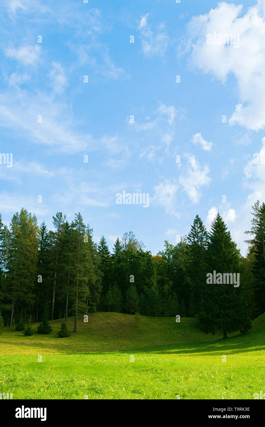 Forest spring landscape scene - dense forest trees in the valley in sunny spring weather. Forest spring nature - Stock Image