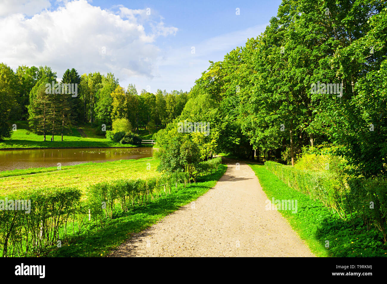 Summer landscape - forest trees growing at the bank of the river and narrow path. Summer park nature in sunny day - Stock Image