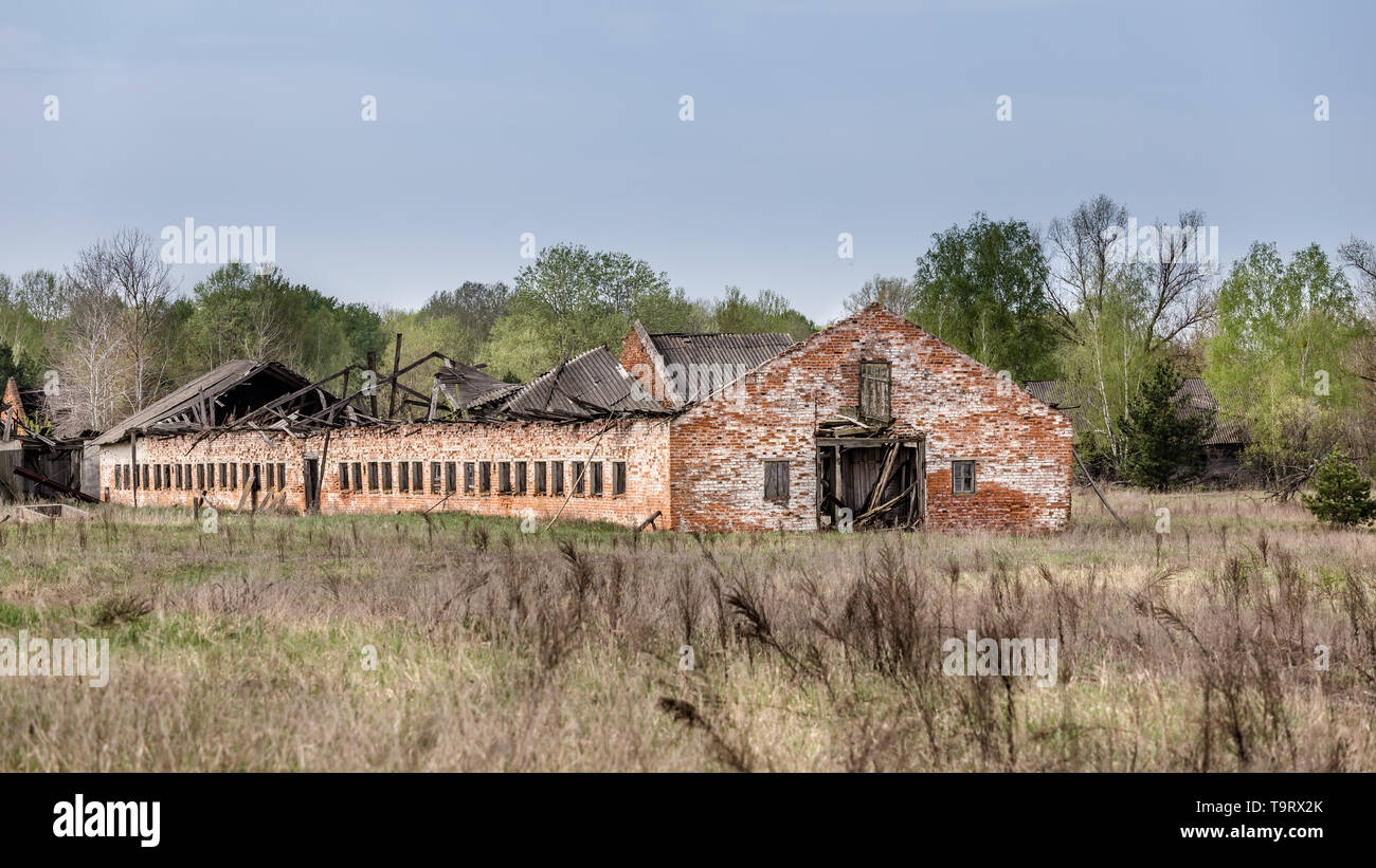 Collapsed farm stable in Belarus Chernobyl exclusion zone, - Stock Image