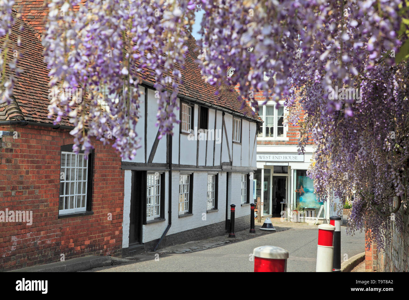 Wisteria framing Tudor cottages in the picturesque Kentish Village of Smarden, Kent, UK - Stock Image