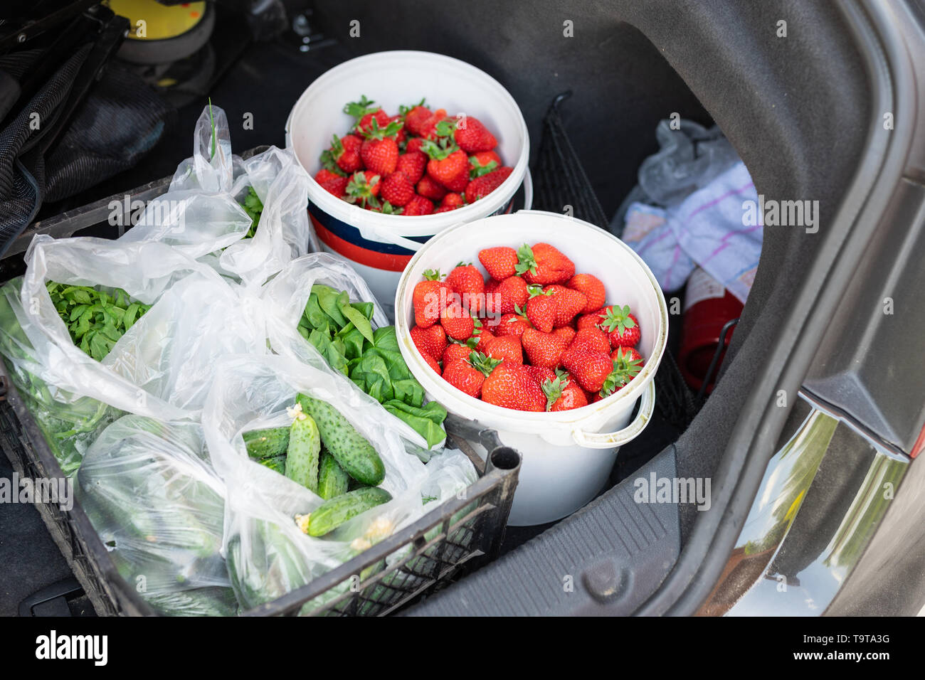 Close-up car trunk with fresh ripe organic vegetables and berries bought  on farmers market. Red juicy sweet strawberries ,greenery and cucumbers in b - Stock Image