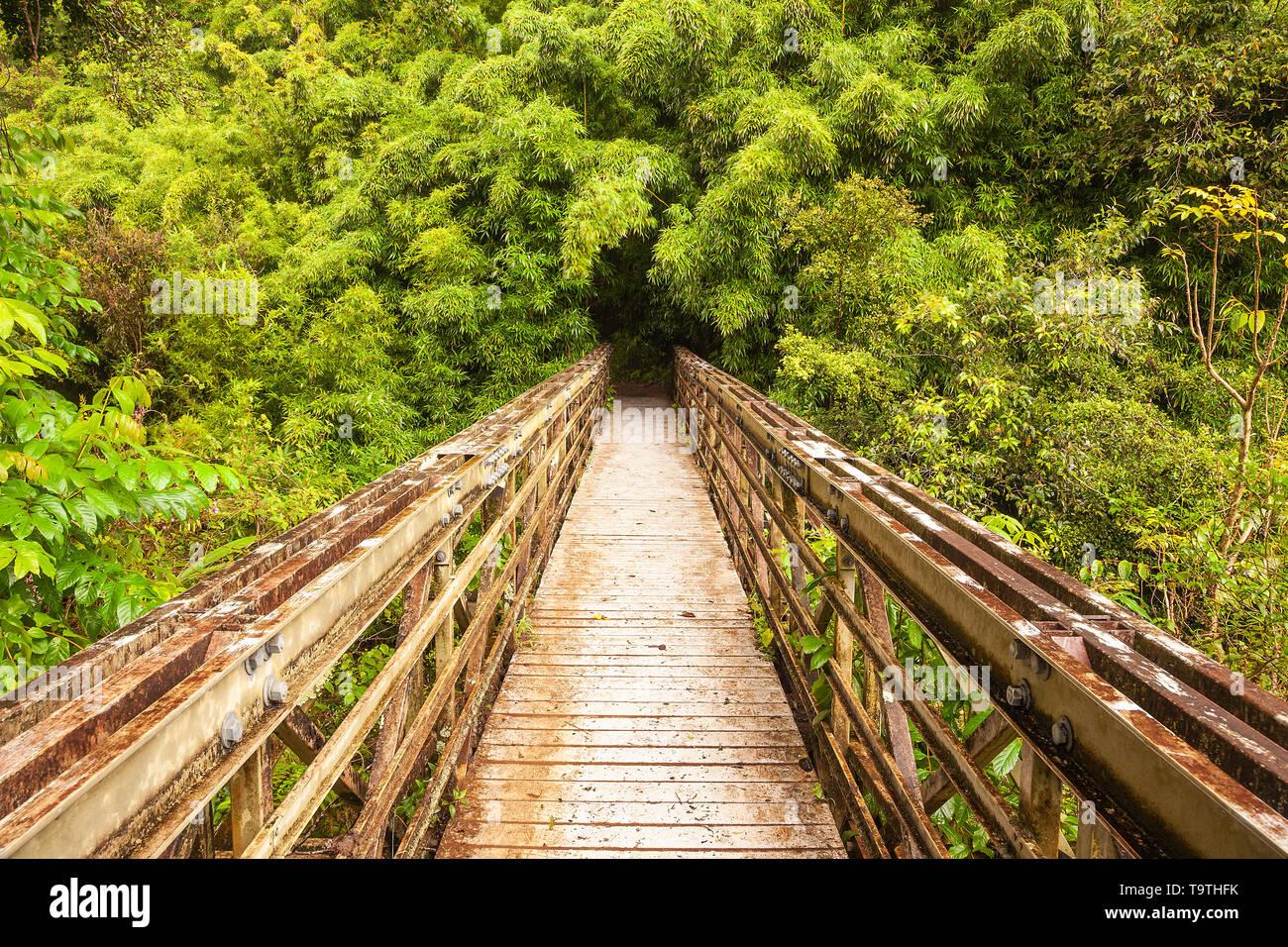 Bridge over river into Bamboo forest, Maui, Hawaii, USA Stock Photo