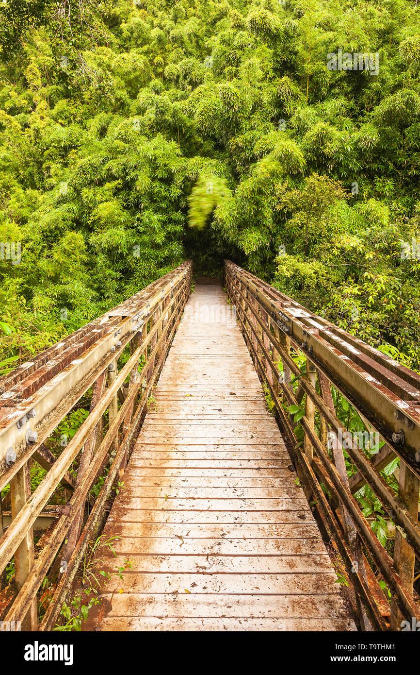 Bridge over stream into Bamboo forest, Haleakala National Park, Maui, Hawaii, USA Stock Photo