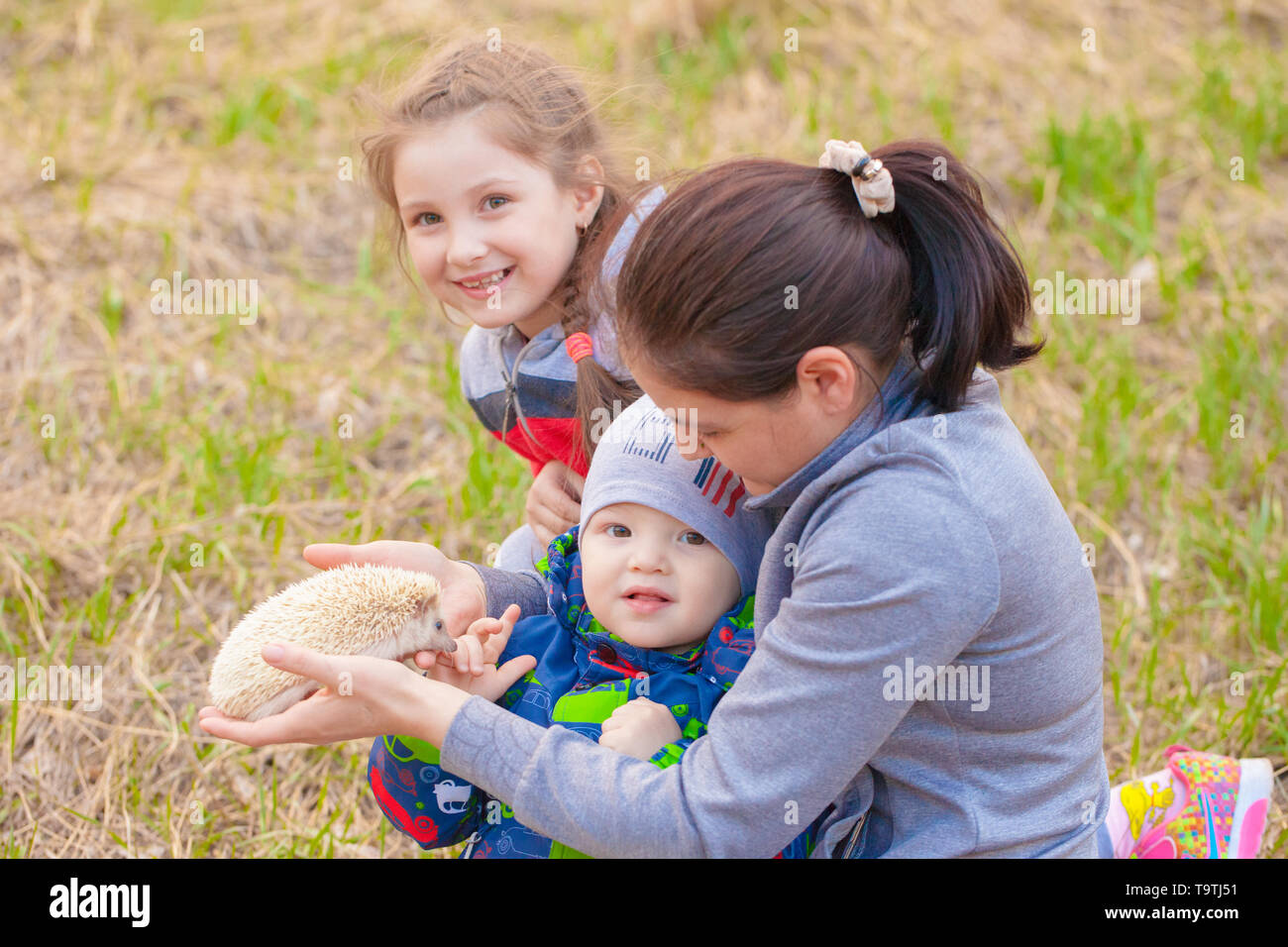 The concept of a happy family. Children play with a hedgehog. Mom walks with the babies. - Stock Image