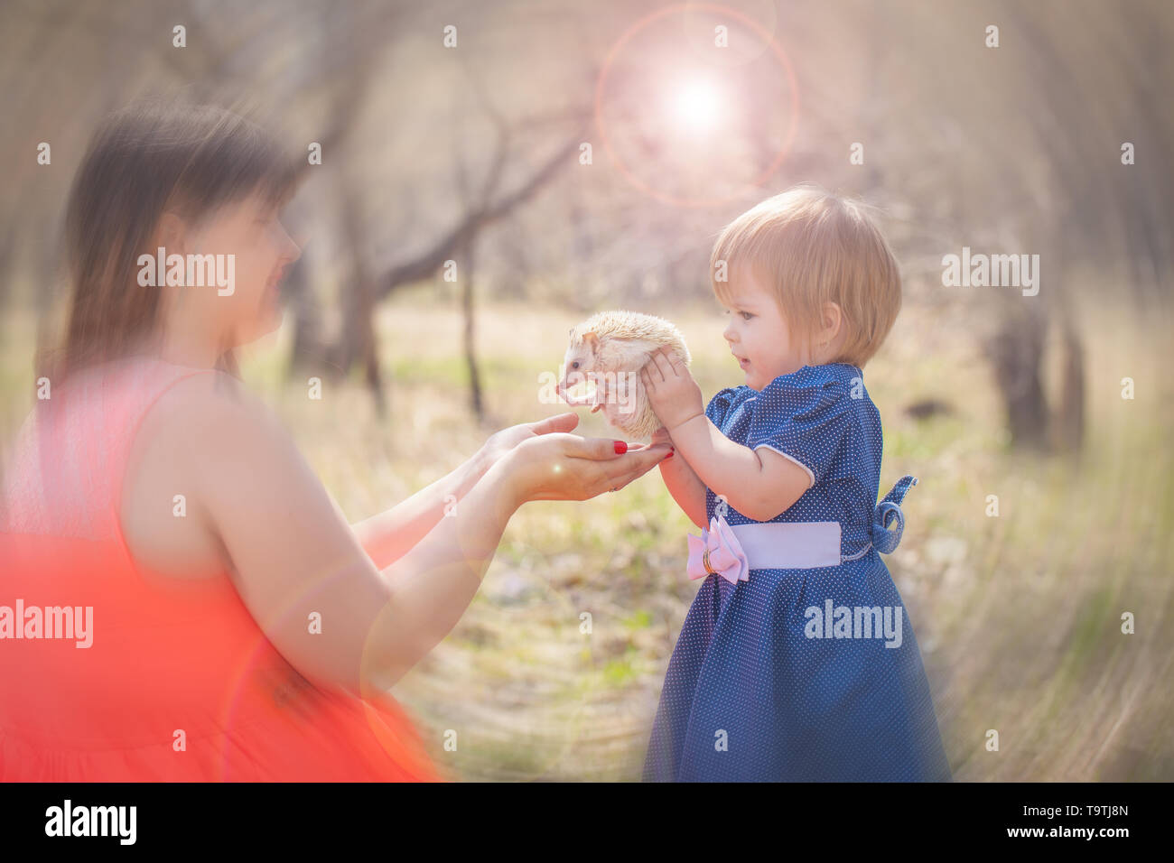 Little girl holding a hedgehog. The child plays with the animal. Mom and daughter are walking with a pet. - Stock Image