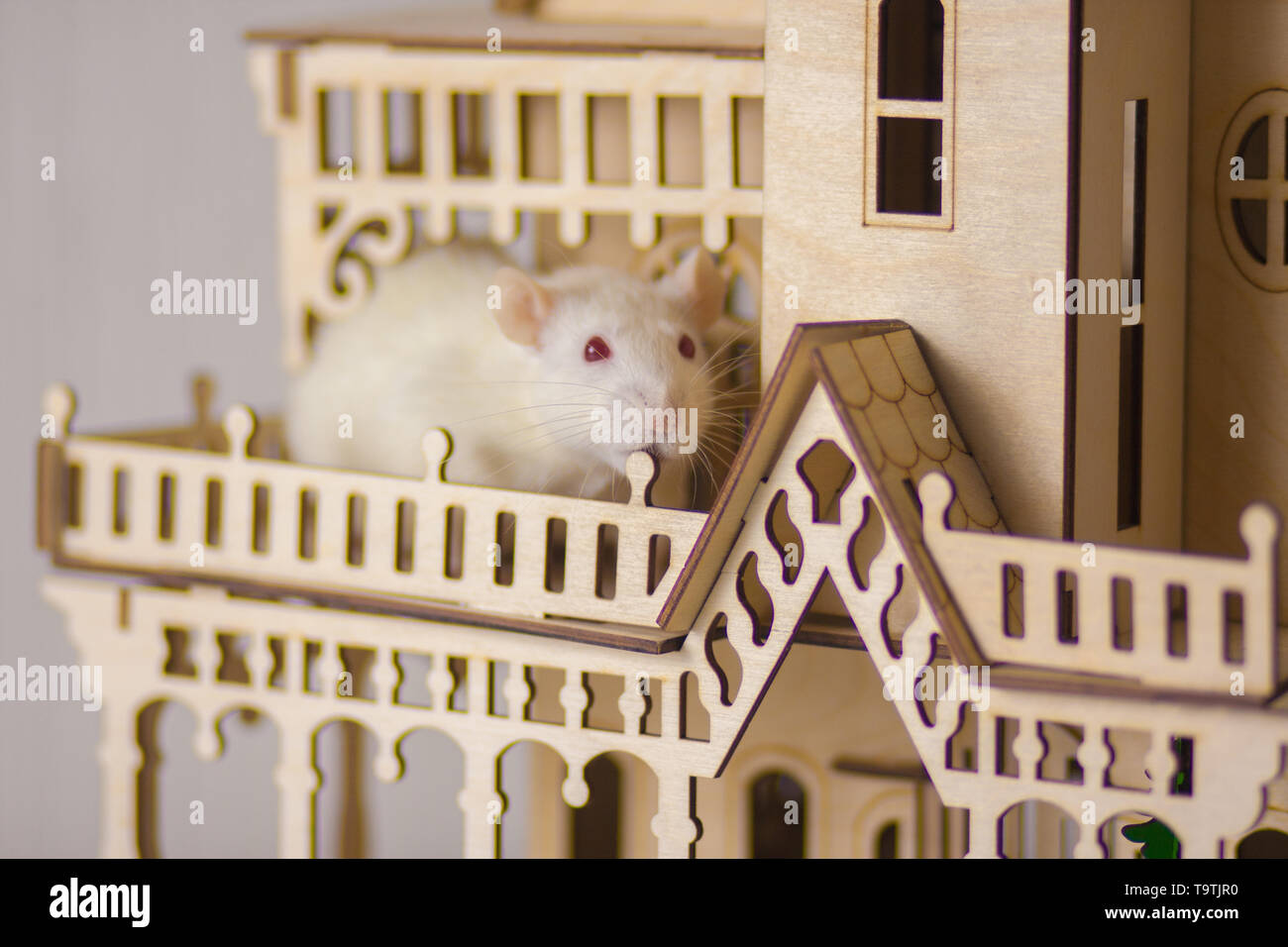 The concept of a fairy tale. A rat The concept of a fairy tale. A rat in the house. White mouse in a wooden Palace. - Stock Image
