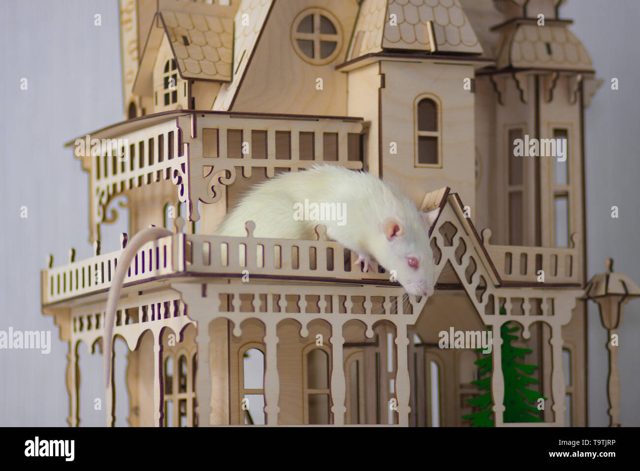 A house for the rodent. White rat in a wooden house. The mouse sits in a beautiful castle. - Stock Image