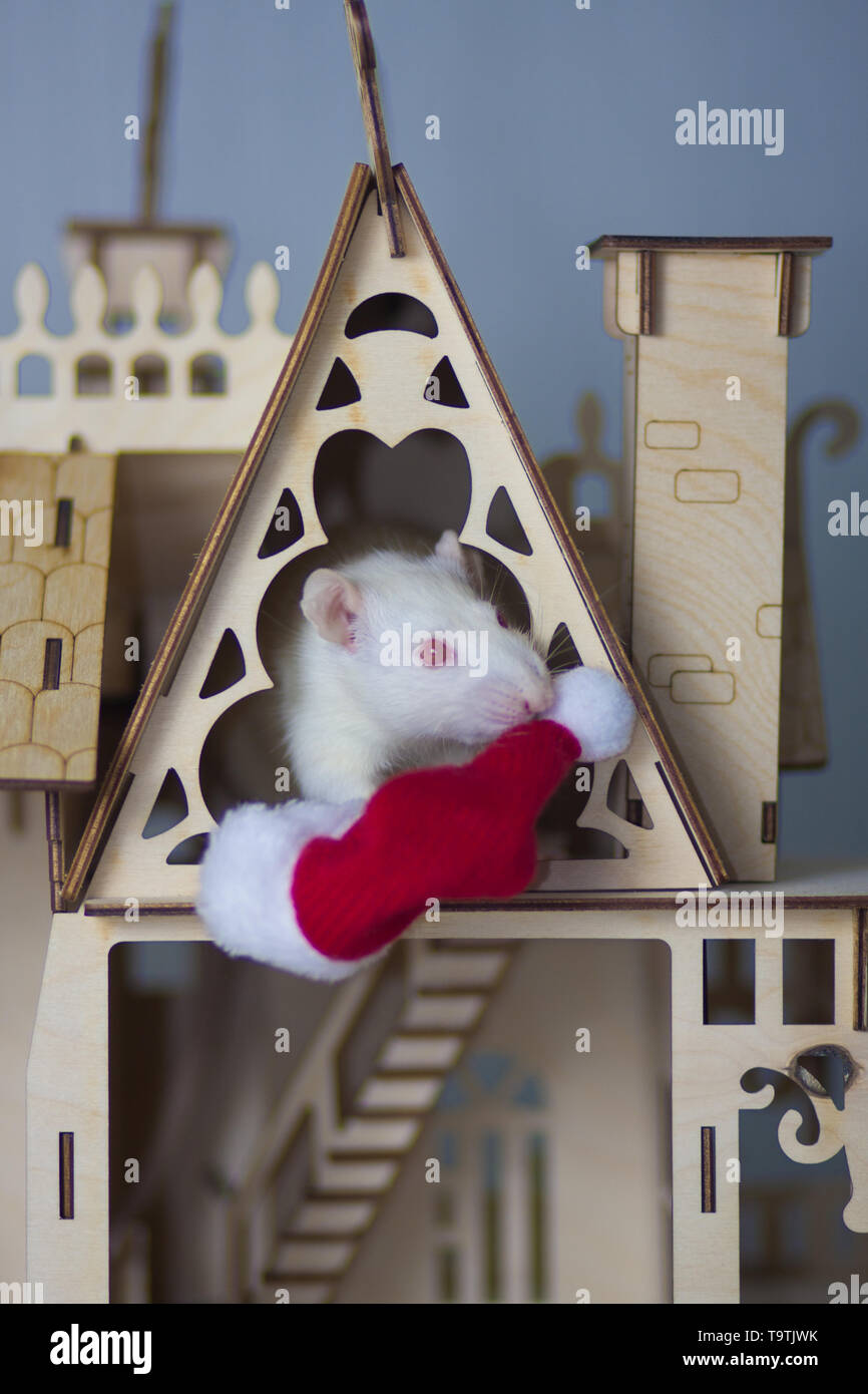 White mouse with wooden house. Rat in a Christmas hat. Rat is a symbol of Chinese new year. - Stock Image