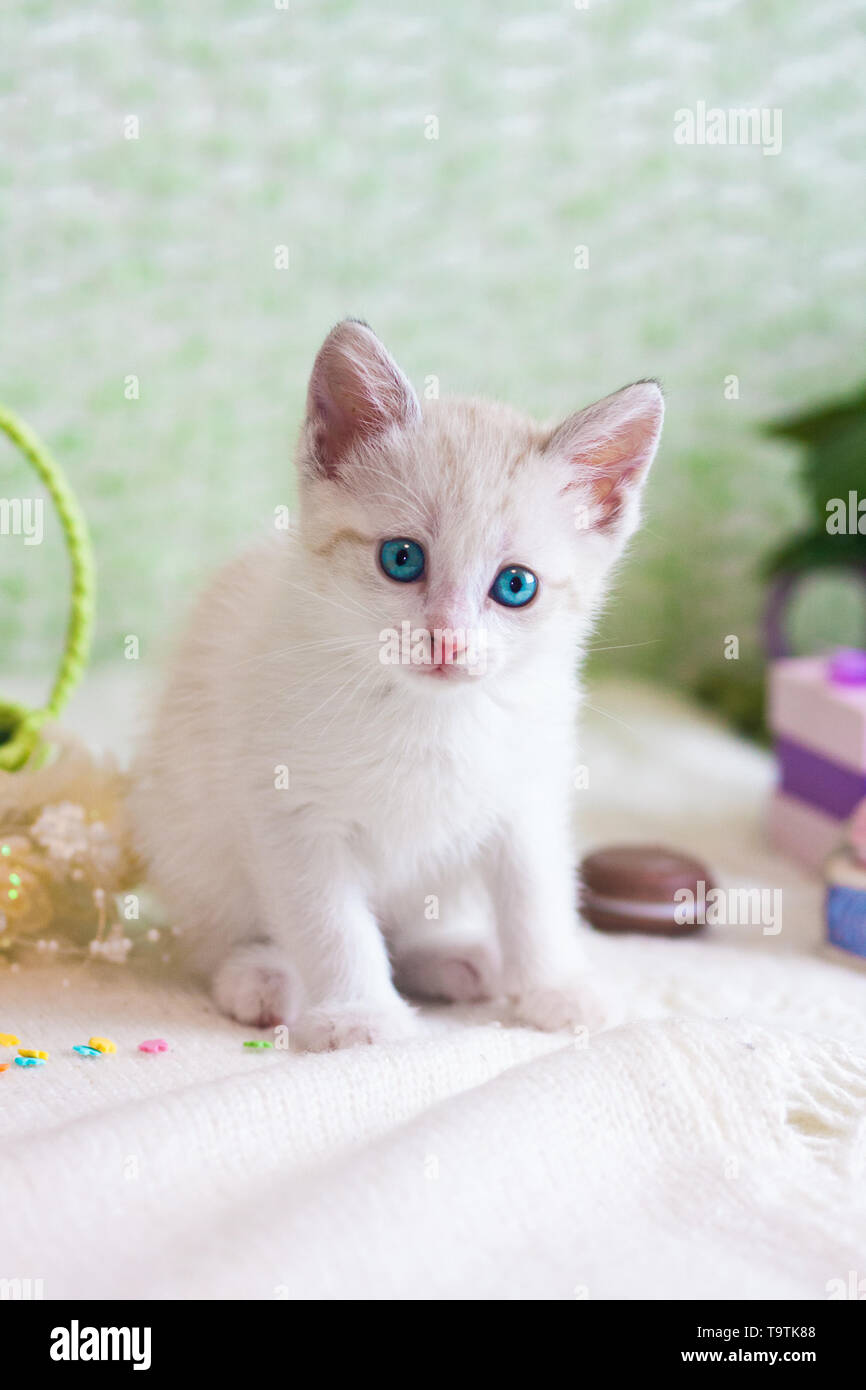 Beautiful kitten close-up. White cat on green background. The pet looks into the camera. - Stock Image