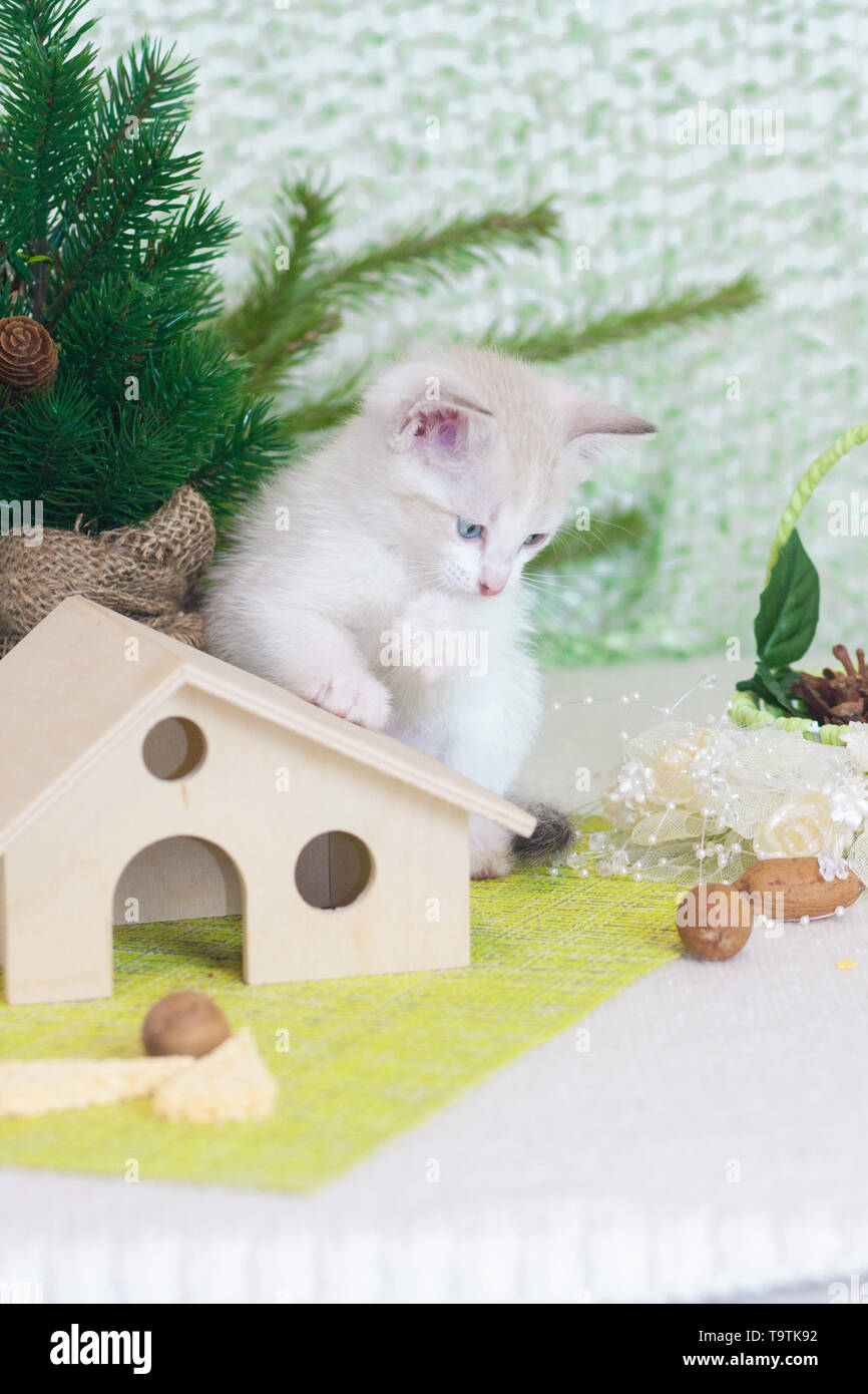 New year kitten. Cat symbol of the new year. Animal on the background of the tree. - Stock Image