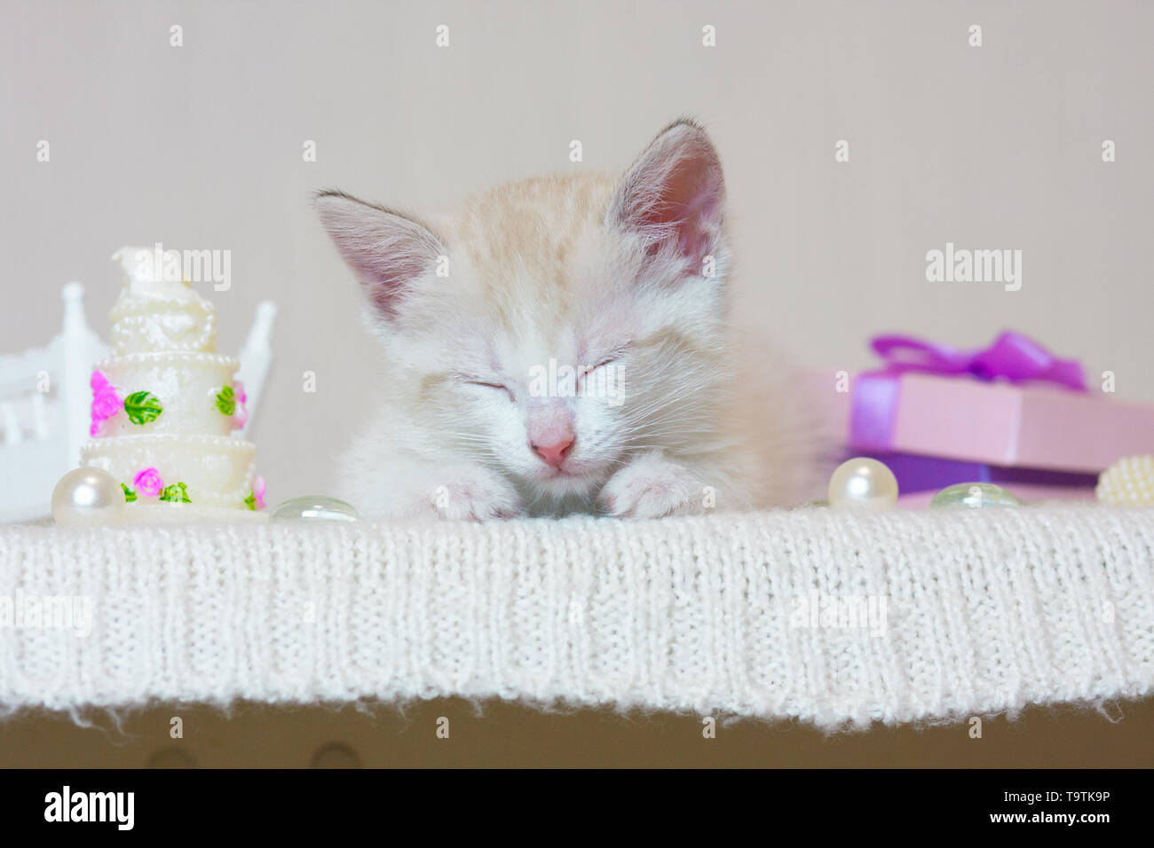 The concept of dreams. A small kitten sleeping. The cat is resting. The animal dreams. - Stock Image