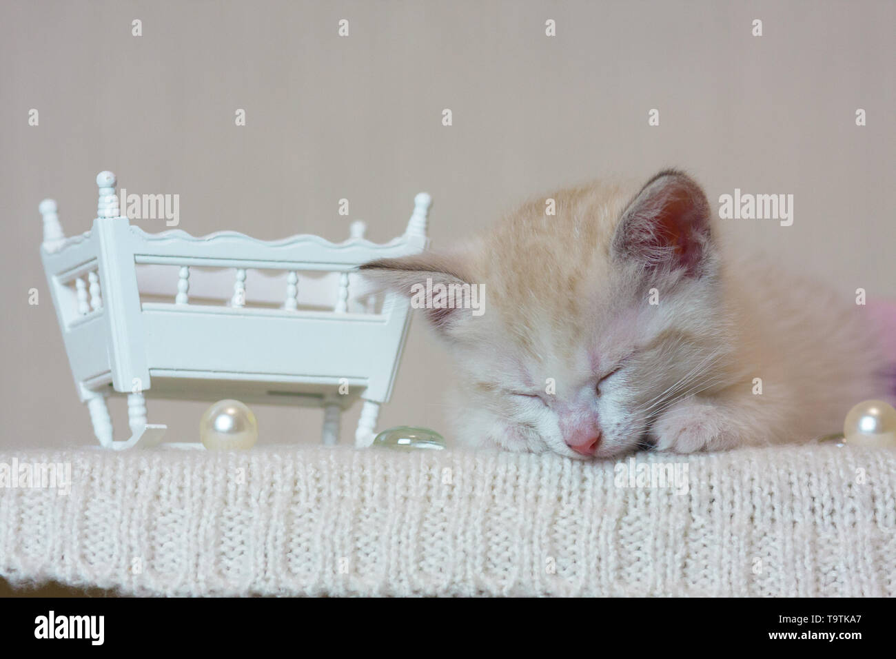 The concept of sleep. A small kitten sleeping. The animal is resting. The white cat dreams. - Stock Image
