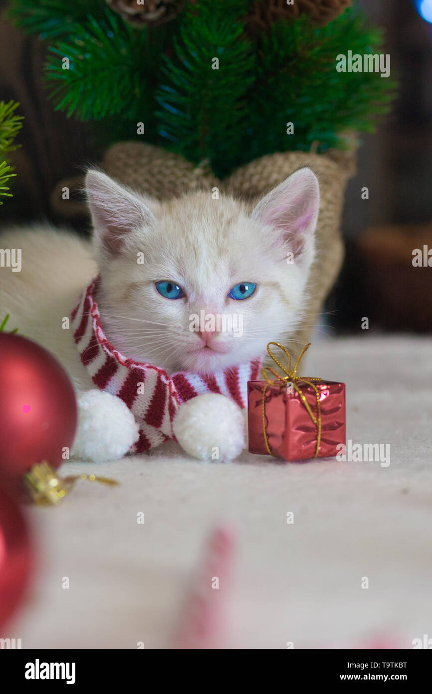 Cat symbol of the new year. Kitten with Christmas toys on the background of the Christmas tree. Festive animals. - Stock Image