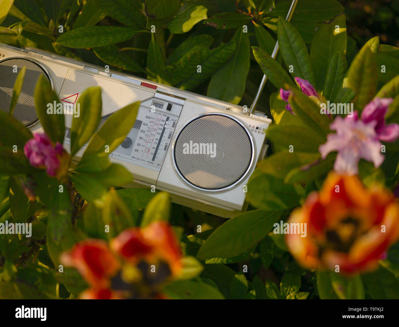Vintage stereo cassette player between the blooming flowers, concept of a garden party - Stock Image