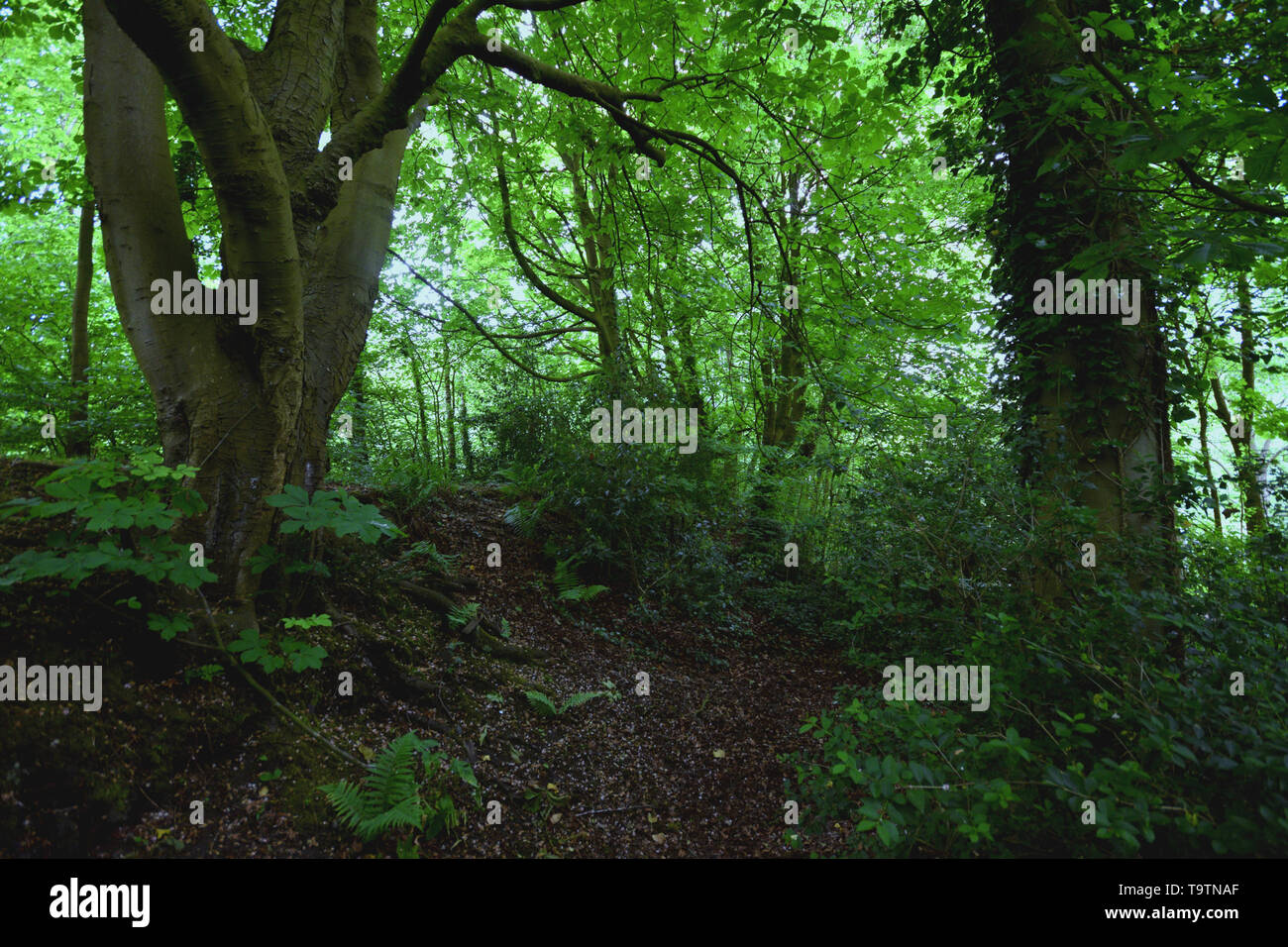 Forest path - Stock Image