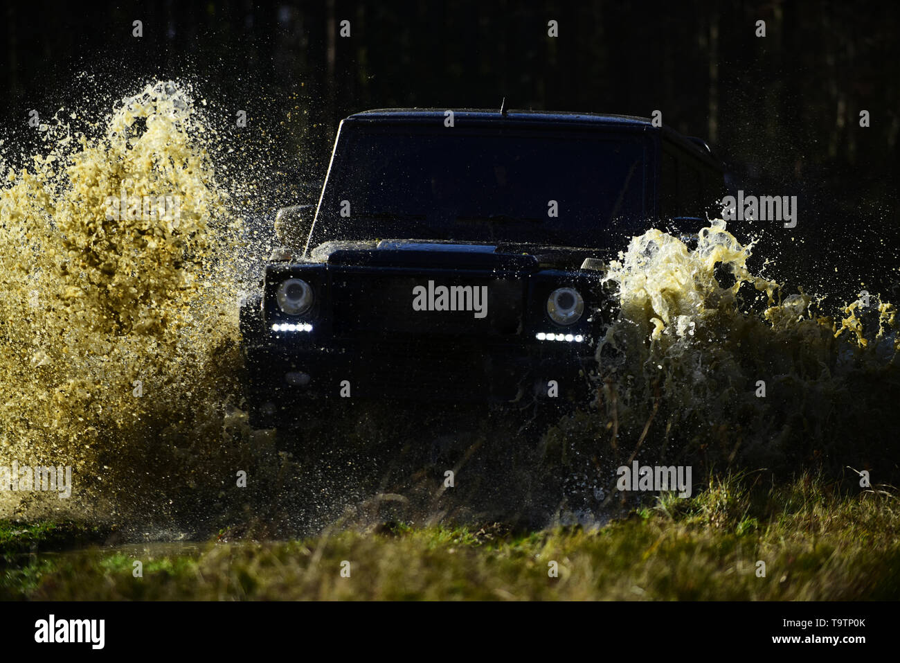 Offroad race on fall nature background. Extreme, challenge and 4x4 vehicle concept. SUV or offroad car on path covered with grass crossing puddle with - Stock Image