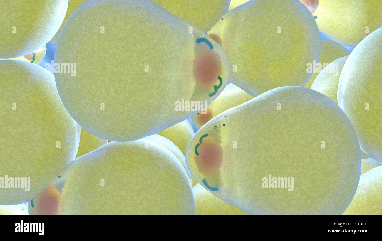 3D illustration of adipocytes that increase due to the huge number of fat molecules. Obesity or the problem of cellulite from a scientific point Stock Photo