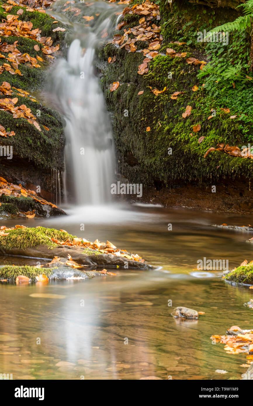 Arce Valley forest. Autumn, Navarre, Spain - Stock Image