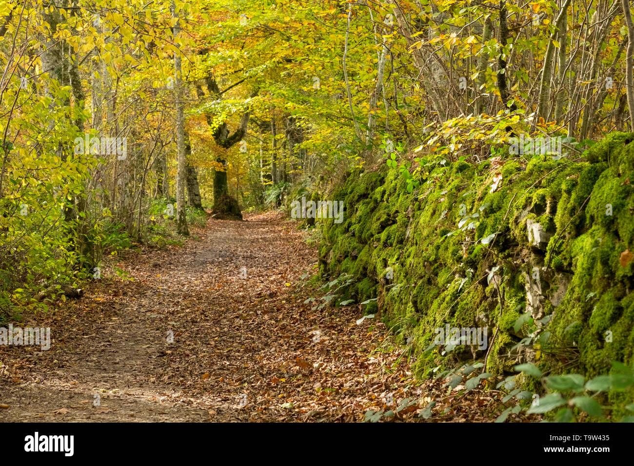 Roncesvalles in Autumn, Navarre, Spain - Stock Image