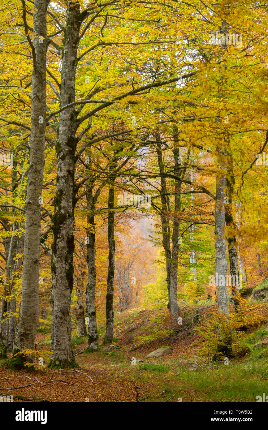 Pure air into the forest, Navarre, Spain - Stock Image