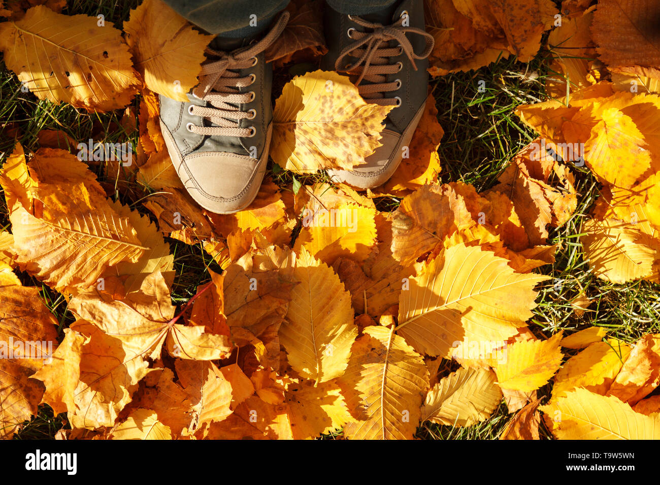 Autumn background, leaves, feet and shoes. Conceptual image of feet in sneakers on yellow autumn leaves. Shoes for nature walks - Stock Image