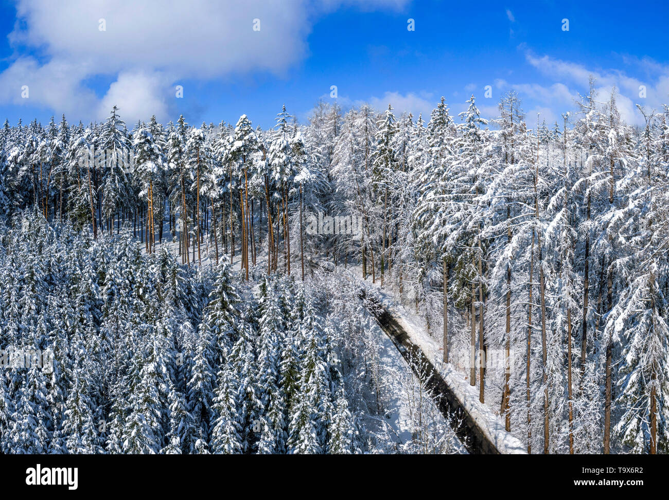 Winter scenery with snowy spruces, Tutzing, Upper Bavaria, Bavaria, Germany, Europe, Winterlandschaft mit schneebedeckten Fichten, Oberbayern, Bayern, - Stock Image