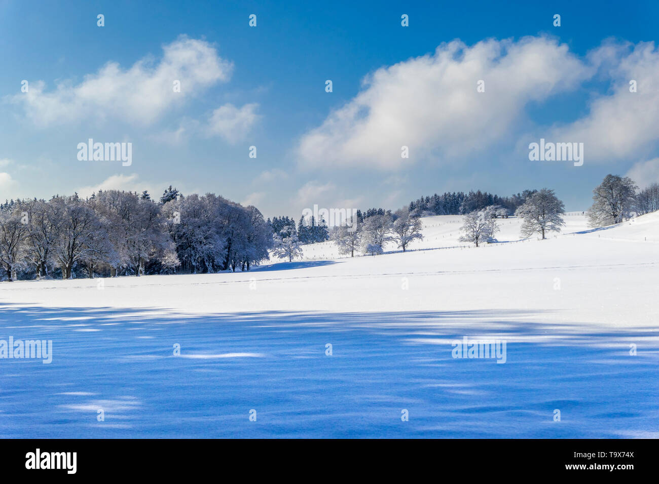 Nice winter scenery after fresh snowfall on the Ilkahöhe, Tutzing, Bavaria, Germany, Europe, Schöne Winterlandschaft nach Neuschnee auf der Ilkahöhe,  Stock Photo