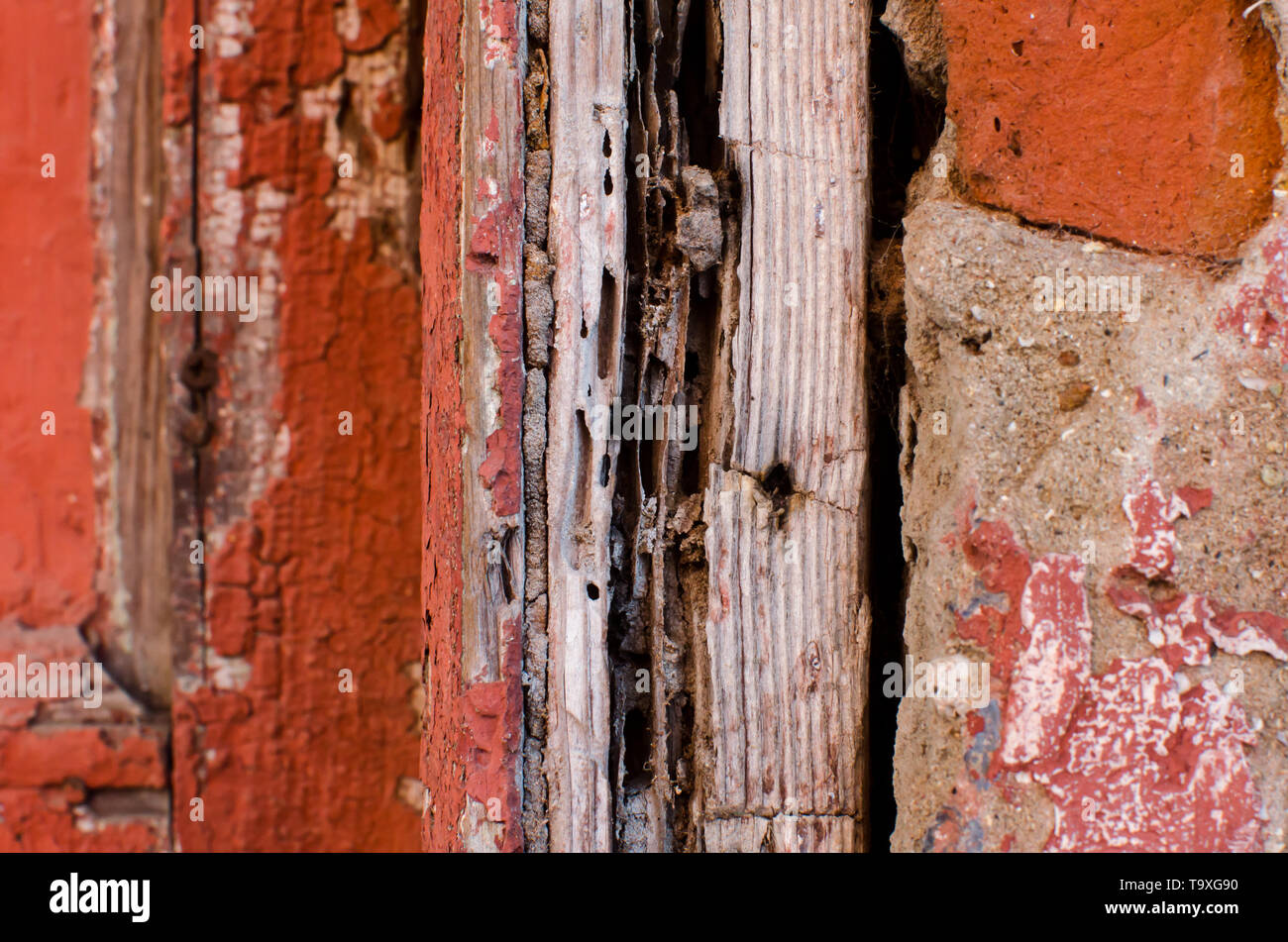 Texture of piece of wood attacked by termites - Stock Image