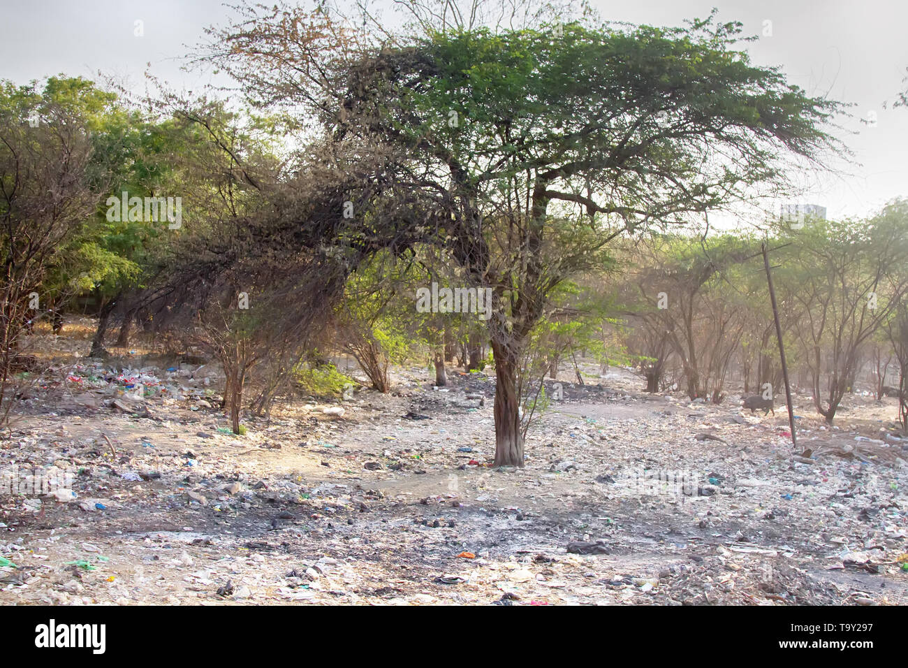 Dumping of household waste n acacia grove, India - Stock Image