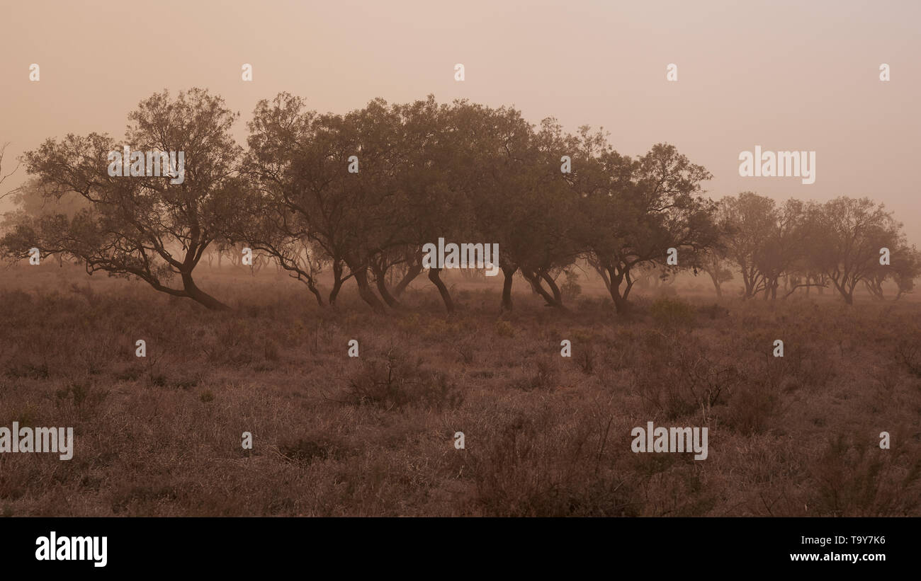 Muted colours and low light levels as a localised dust storm passes over typical Australian bushland. - Stock Image