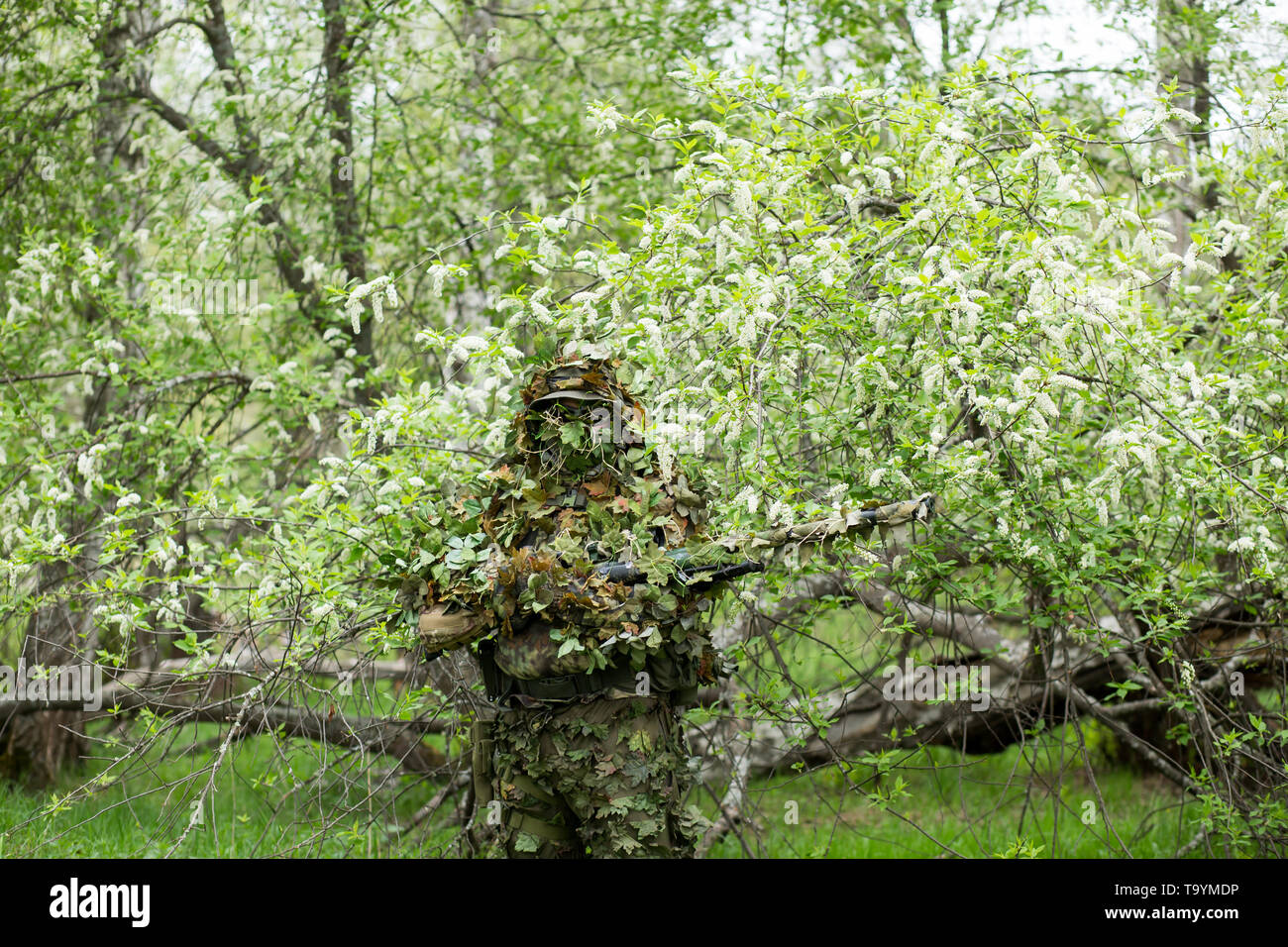 Male sniper posing in green camouflage camouflage clothing with a gun, a rifle on hand in the forest near the cherry blossoms. Army, military, airsoft - Stock Image