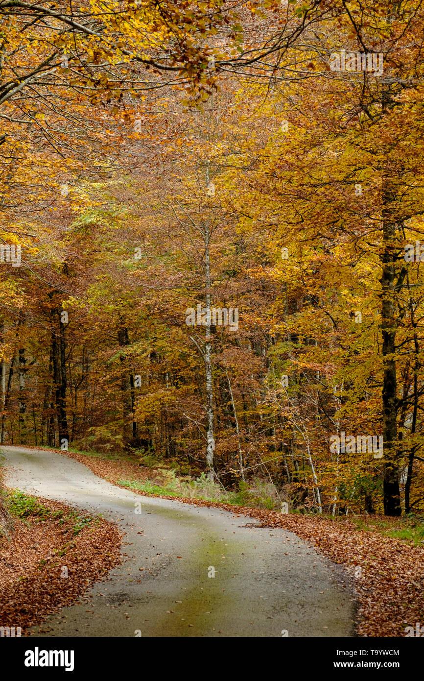 Sorograin forest, Navarre, Spain - Stock Image
