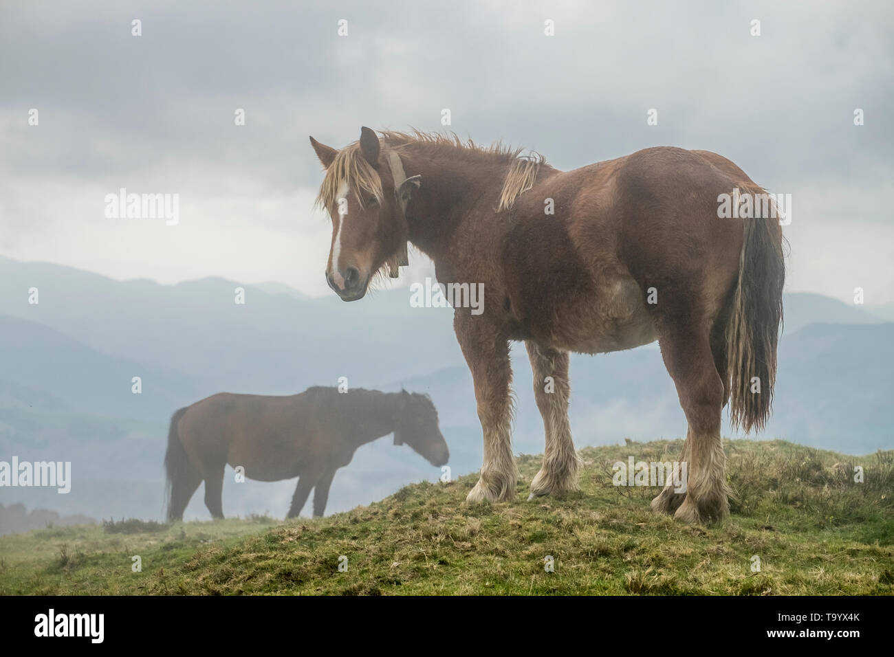 Horses on the fog, Navarre, Spain - Stock Image