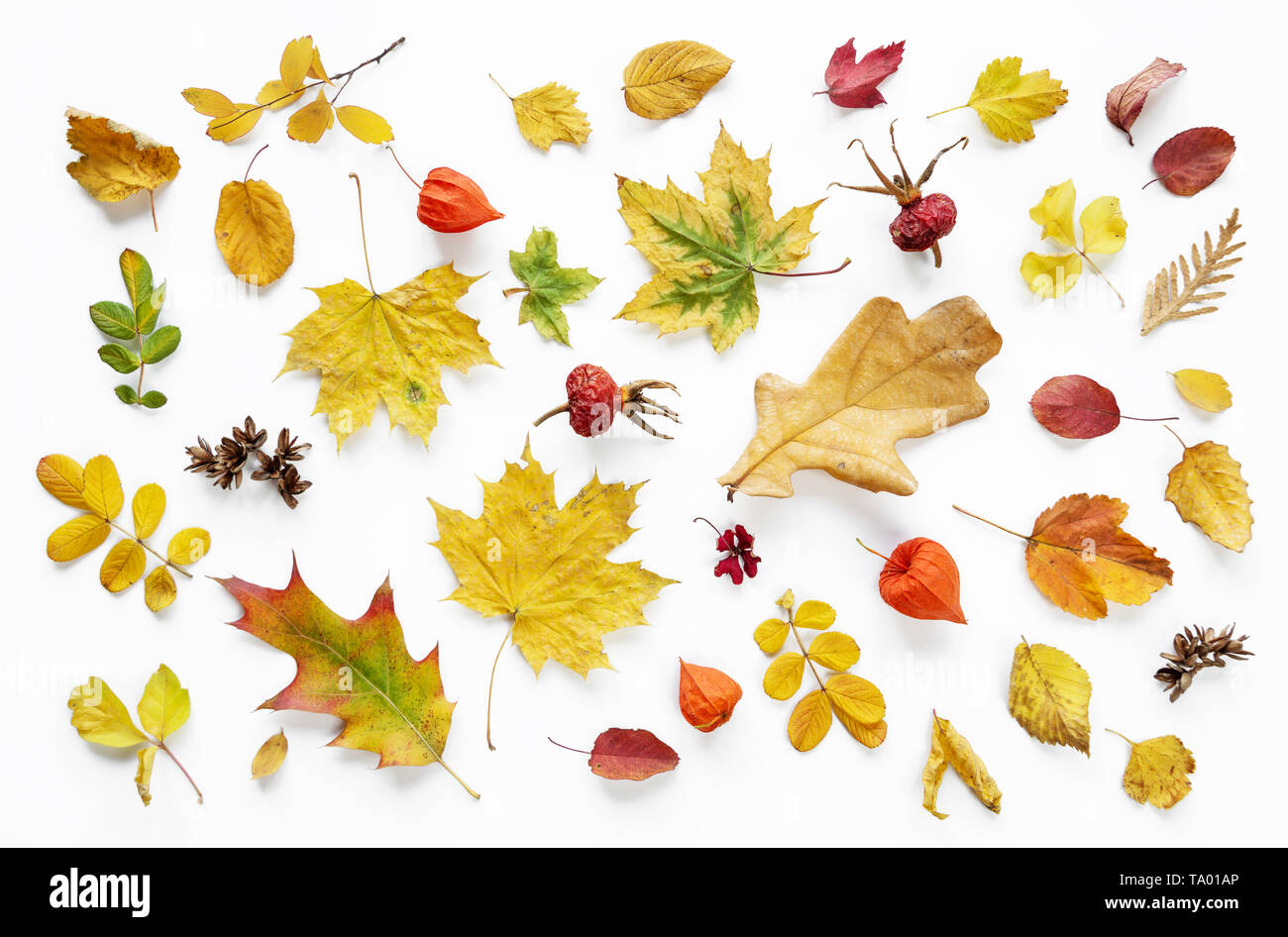Colorful and bright background of fallen autumn leaves on white Stock Photo