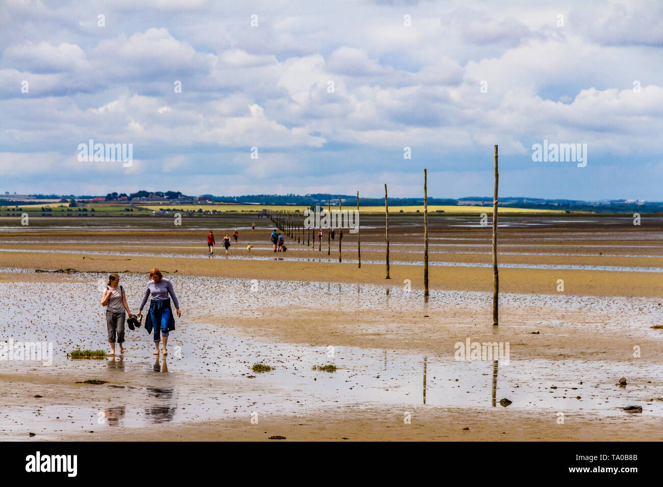 Walkers crossing tidal sands between Beal and the Holy Island of Lindisfarne using the poles marking the Pilgrim's Way. Northumberland, UK. July 2018. - Stock Image