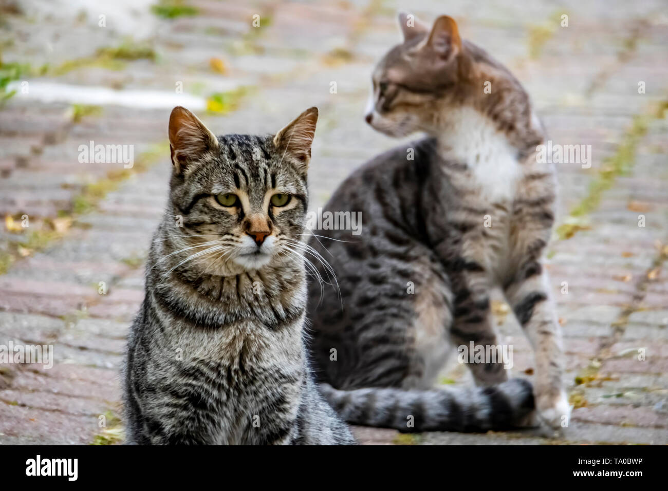 close up cute friends cats on car in nature - Stock Image