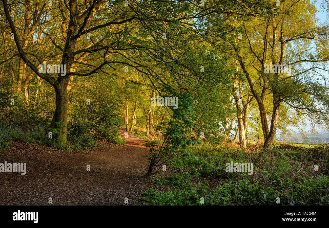 A path in The Outwoods which is one of the oldest surviving woodland sites in Charnwood. - Stock Image