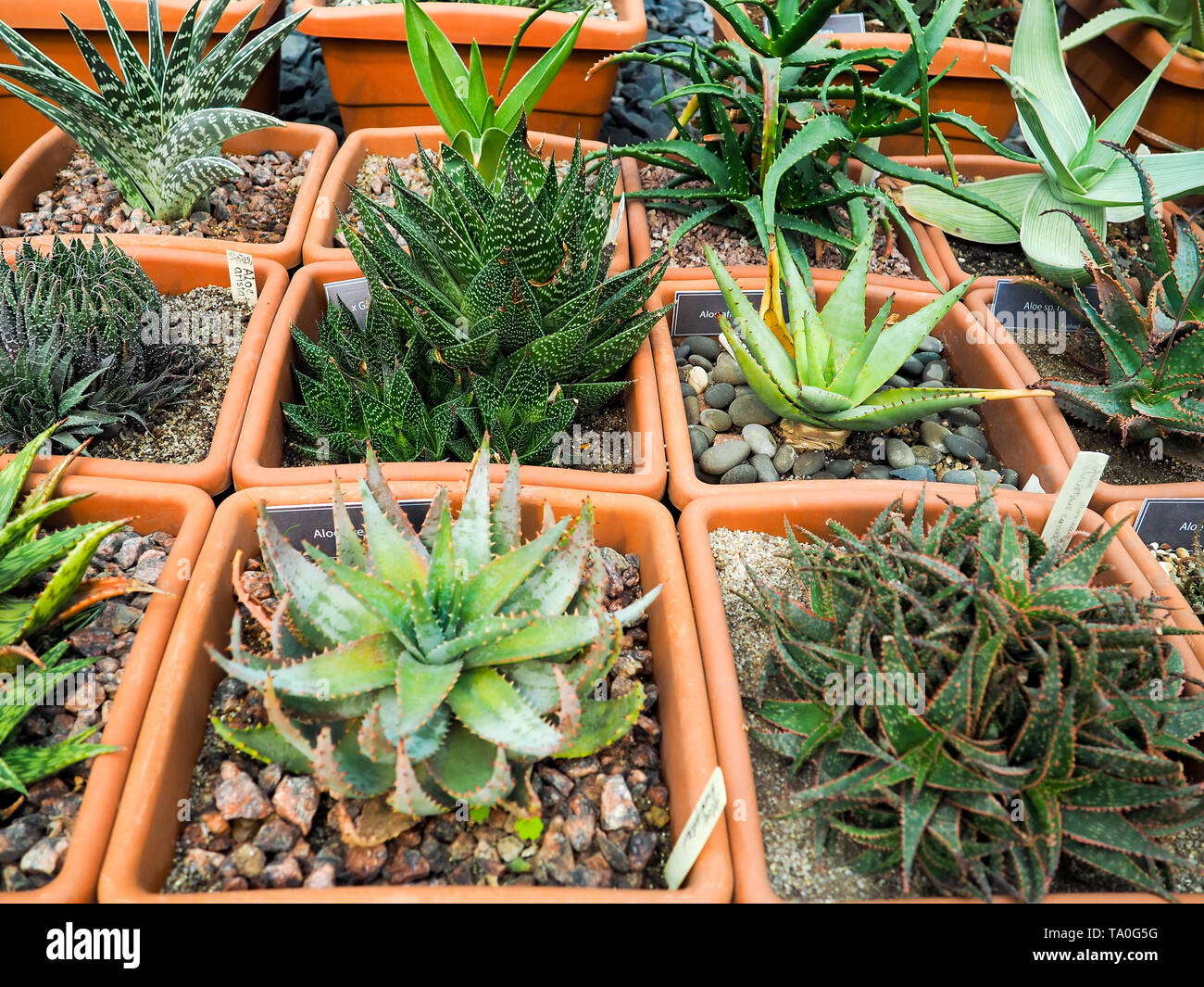 succulents in pot over . Scandinavian style interior decoration Stock Photo