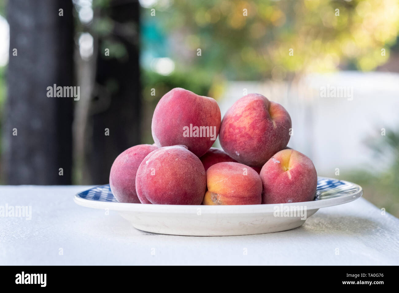 white plate with many freshly picked plums - Stock Image