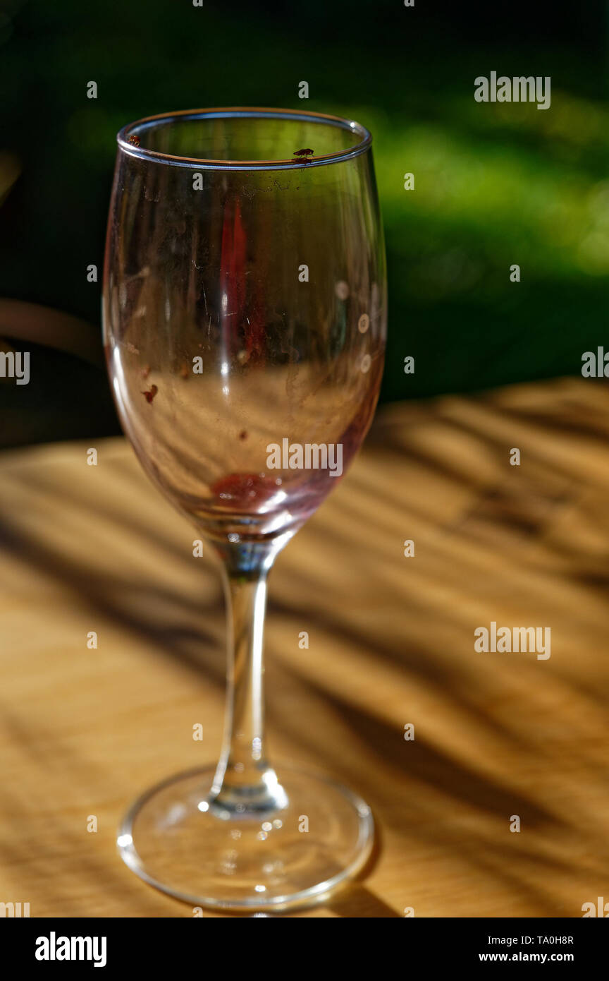 A wine glass left on a table attracts fruit flies - Stock Image