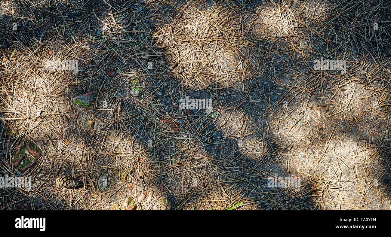 Needles of a conifer and shadow play on the soil - Stock Image