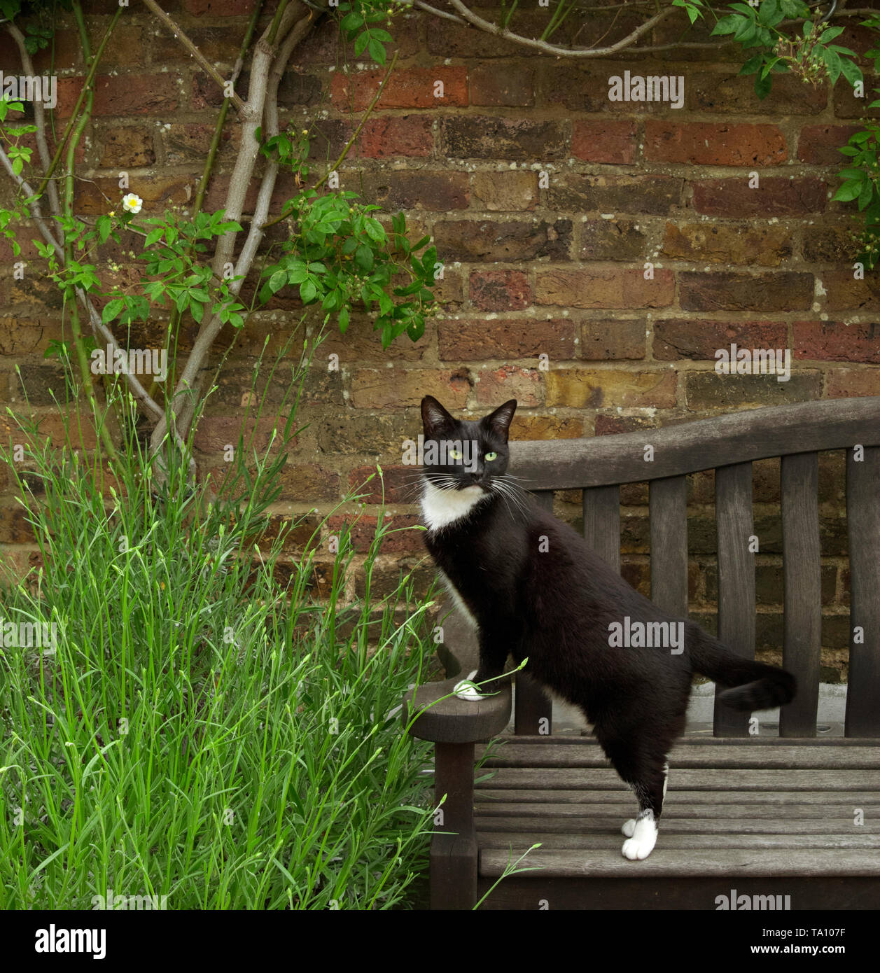 Cool Black And White Cat On A Garden Bench Stock Photo 247113875 Inzonedesignstudio Interior Chair Design Inzonedesignstudiocom