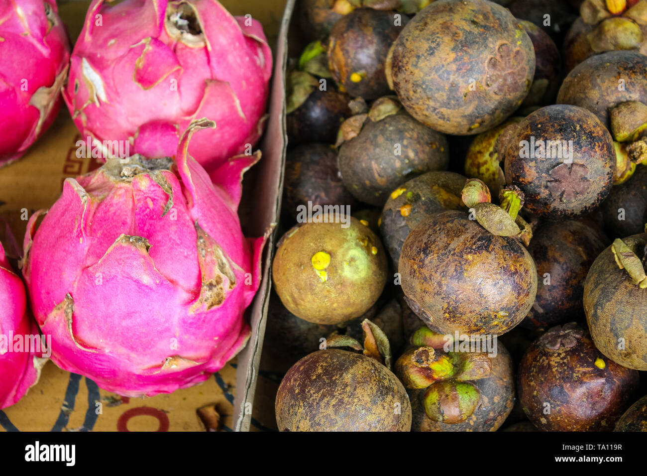 Pile of mangosteen and Dragonfruit. Mangosteen or purple mangosteen is a tropical evergreen tree with edible fruit native to Island Southeast Asia. - Stock Image